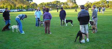 Basic Obedience Class, Summer 2007