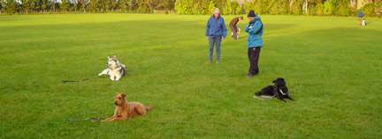 Canine Good Citizen Class practising their 'stay' command